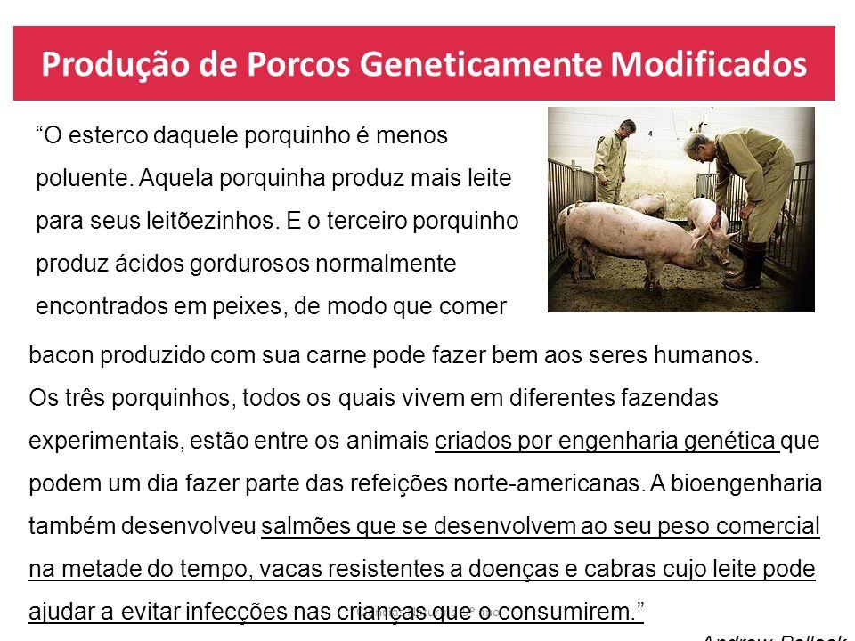 Produção de Porcos Geneticamente Modificados Ciências Naturais 9º ano O esterco daquele porquinho é menos poluente. Aquela porquinha produz mais leite