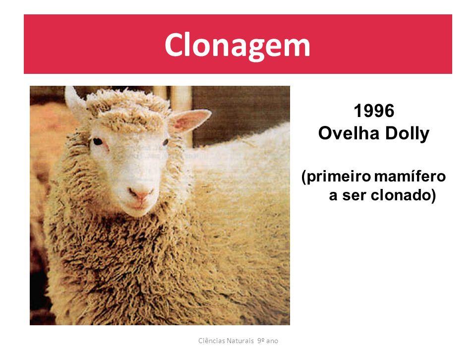 Clonagem Ciências Naturais 9º ano 1996 Ovelha Dolly (primeiro mamífero a ser clonado)