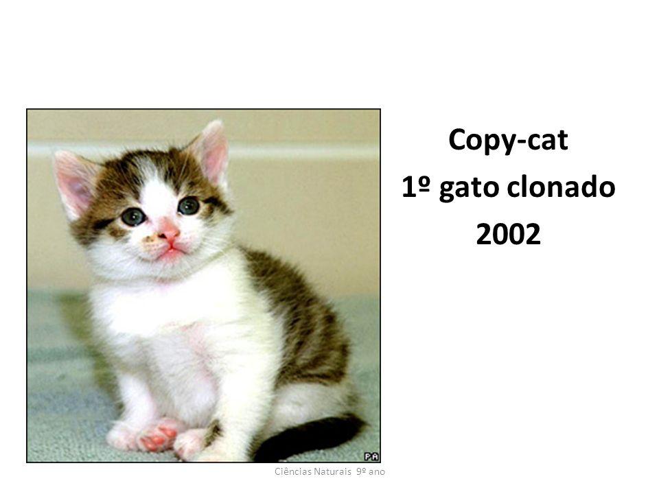 Copy-cat 1º gato clonado 2002 Ciências Naturais 9º ano