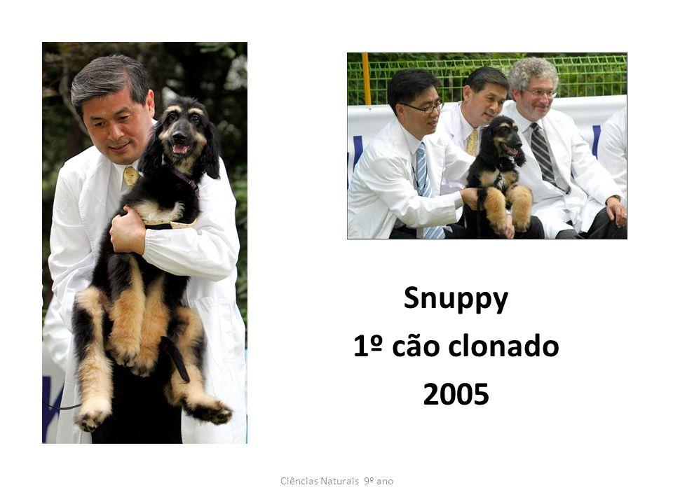 Snuppy 1º cão clonado 2005 Ciências Naturais 9º ano