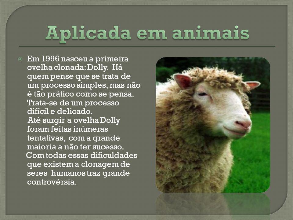 Em 1996 nasceu a primeira ovelha clonada: Dolly. Há quem pense que se trata de um processo simples, mas não é tão prático como se pensa. Trata-se de u