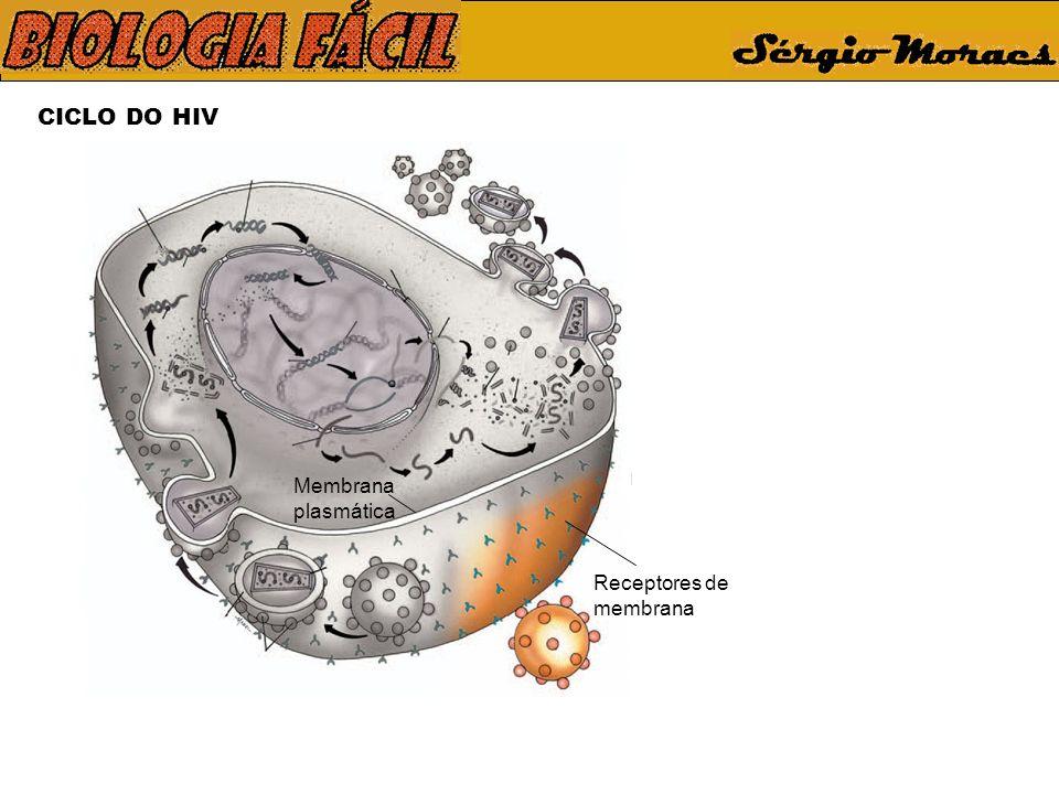 CICLO DO HIV Receptores de membrana Membrana plasmática