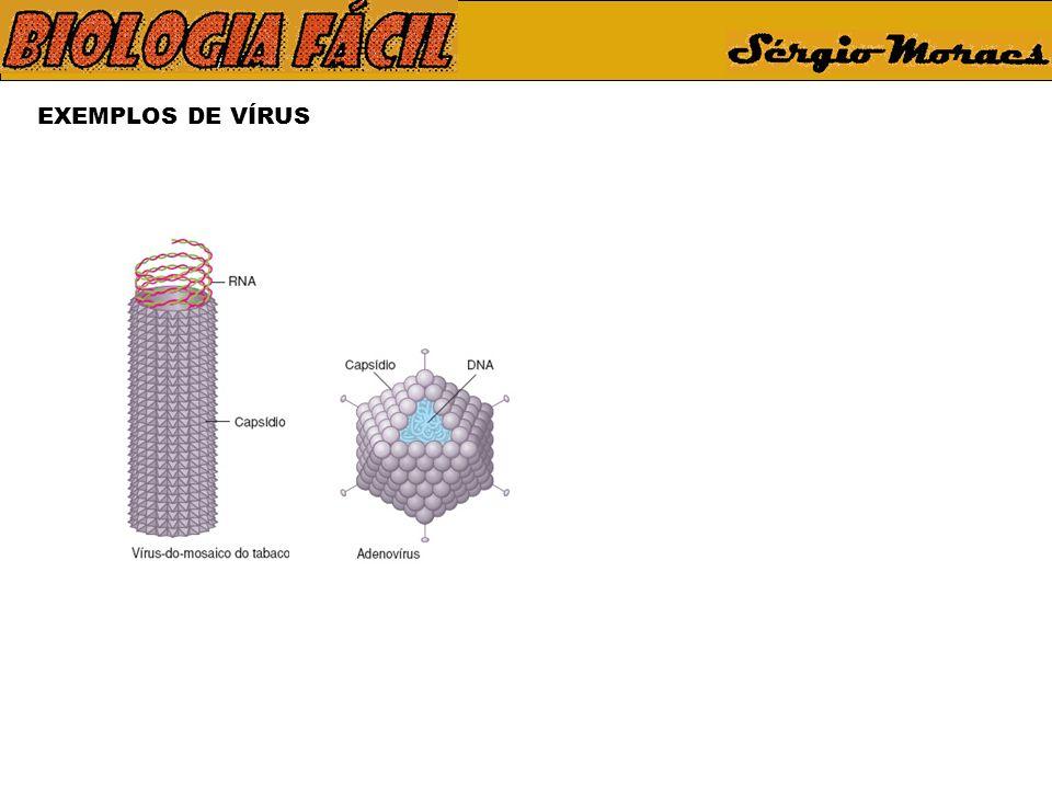 CICLO DO VÍRUS DA GRIPE Vírus infectante Membrana plasmática Fixação da partícula viral à membrana celular Receptor celular Proteína do envoltório viral Membrana plasmática