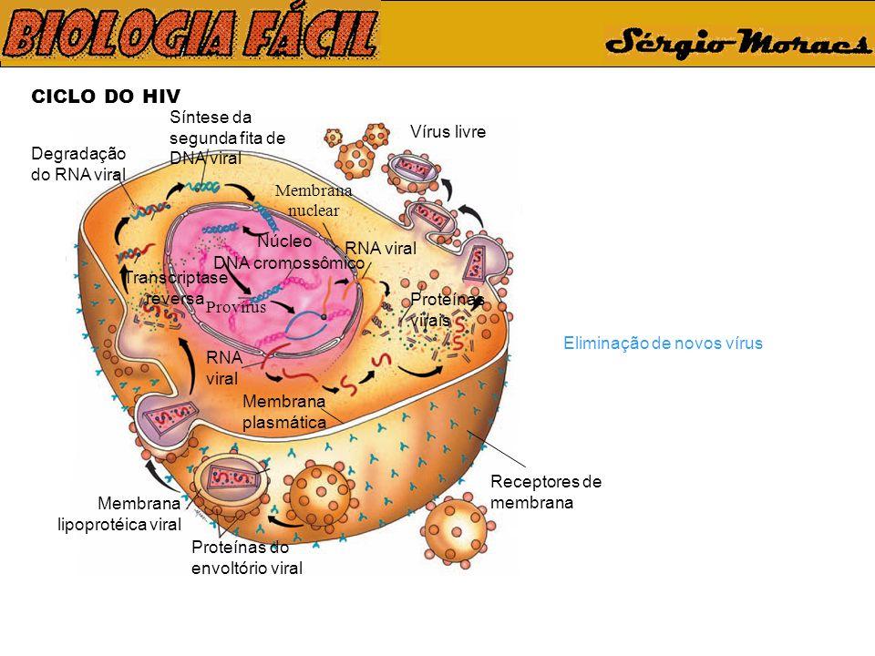 CICLO DO HIV Eliminação de novos vírus Síntese da segunda fita de DNA viral Receptores de membrana Vírus livre Proteínas do envoltório viral Membrana