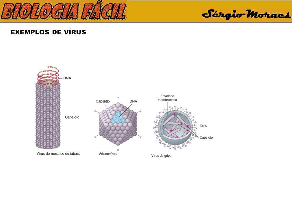 CICLO DO VÍRUS DA GRIPE Vírus infectante Membrana plasmática Receptor celular Proteína do envoltório viral Membrana plasmática Penetração do vírus