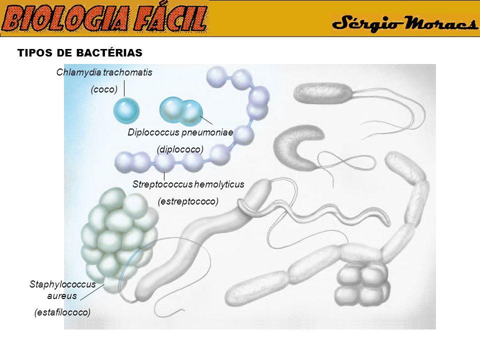 TIPOS DE BACTÉRIAS Chlamydia trachomatis (coco) Diplococcus pneumoniae (diplococo) Streptococcus hemolyticus (estreptococo) Staphylococcus aureus (estafilococo)