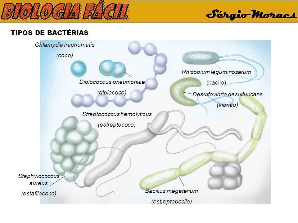 TIPOS DE BACTÉRIAS Chlamydia trachomatis (coco) Diplococcus pneumoniae (diplococo) Streptococcus hemolyticus (estreptococo) Staphylococcus aureus (estafilococo) Rhizobium leguminosarum (bacilo) Bacillus megaterium (estreptobacilo) Desulfovibrio desulfuricans (vibrião)