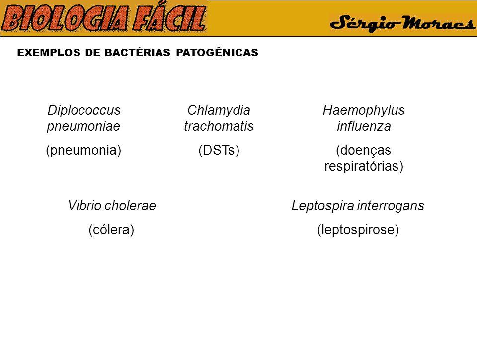 EXEMPLOS DE BACTÉRIAS PATOGÊNICAS Diplococcus pneumoniae (pneumonia) Chlamydia trachomatis (DSTs) Haemophylus influenza (doenças respiratórias) Vibrio cholerae (cólera) Leptospira interrogans (leptospirose)