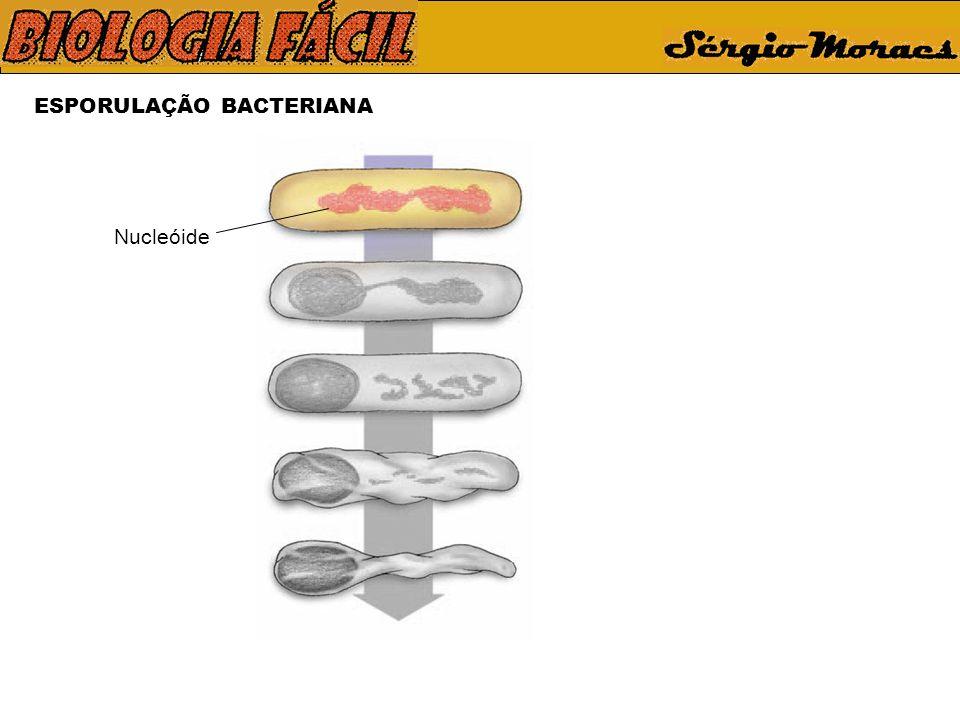 ESPORULAÇÃO BACTERIANA Nucleóide