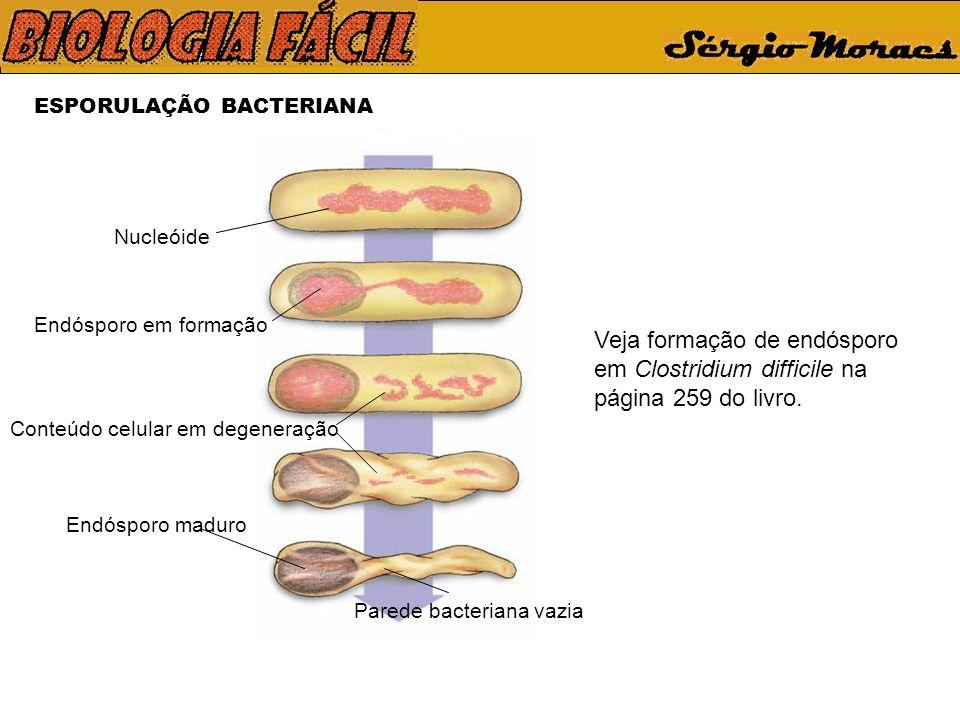 ESPORULAÇÃO BACTERIANA Veja formação de endósporo em Clostridium difficile na página 259 do livro. Parede bacteriana vazia Nucleóide Endósporo em form