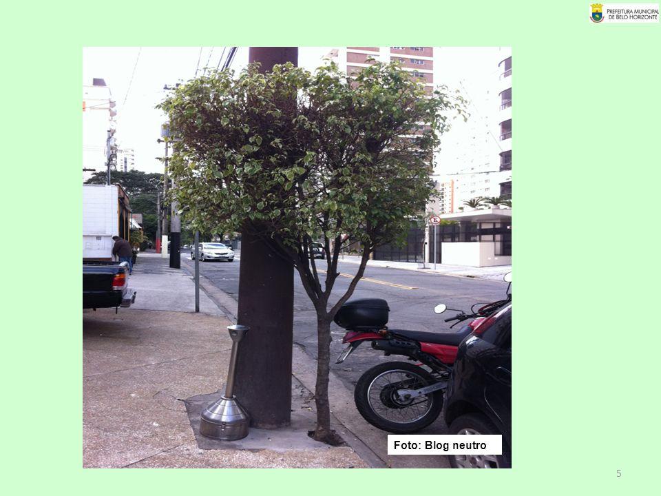 16 Foto: site Viveiro Trees Foto: Agnus Bittencourt