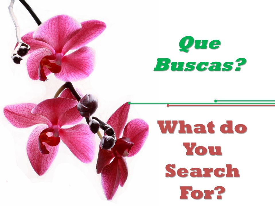 Que Buscas? What do You Search For?