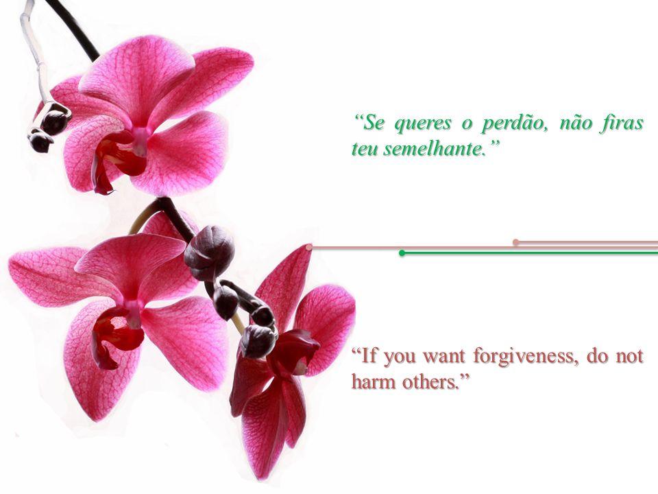 Se queres o perdão, não firas teu semelhante. If you want forgiveness, do not harm others.