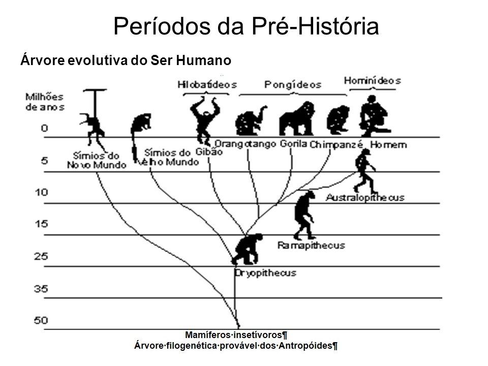 Árvore evolutiva do Ser Humano Períodos da Pré-História
