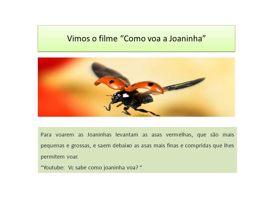 Vimos o filme Como voa a Joaninha Para voarem as Joaninhas levantam as asas vermelhas, que são mais pequenas e grossas, e saem debaixo as asas mais finas e compridas que lhes permitem voar.