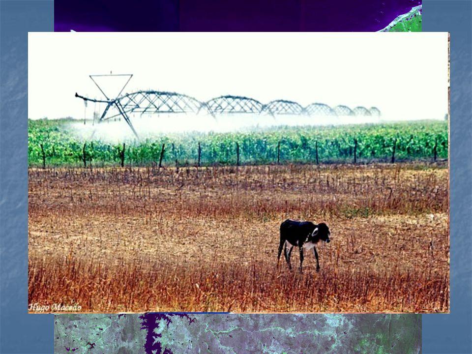 Provável aproveitamento da transposição pelo agronegócio exportador (como a fruticultura irrigada para exportação) e seus impactos: concentração fundiária, êxodo rural, exploração do trabalho, entre outros.