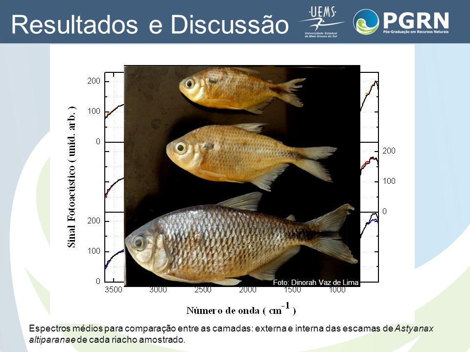 Espectros médios para comparação entre as camadas: externa e interna das escamas de Astyanax altiparanae de cada riacho amostrado. Resultados e Discus