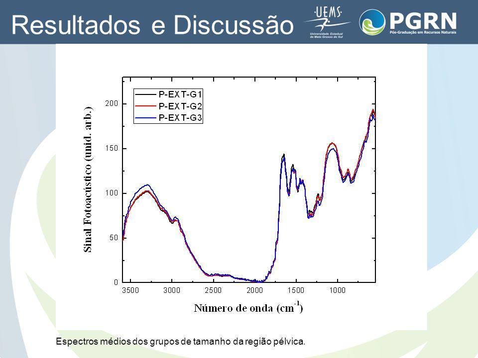 Espectros médios dos grupos de tamanho da região pélvica. Resultados e Discussão