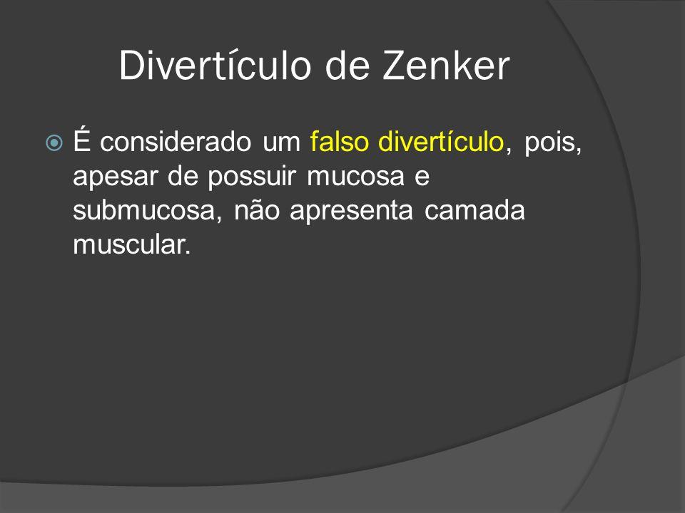 Divertículo de Zenker É considerado um falso divertículo, pois, apesar de possuir mucosa e submucosa, não apresenta camada muscular.