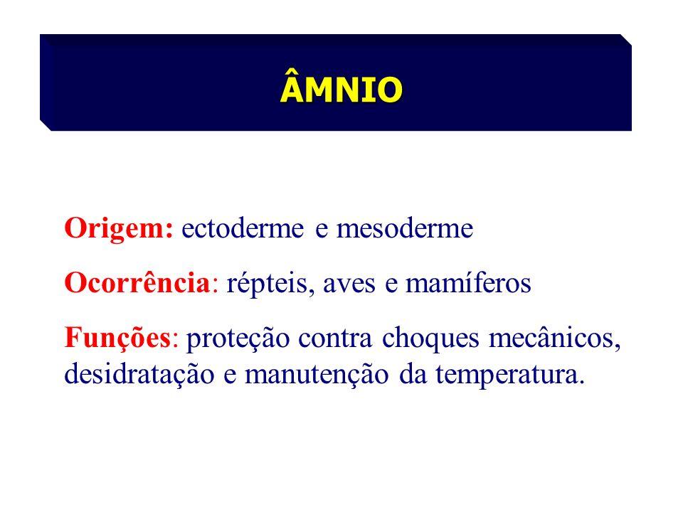 ÂMNIO Origem: ectoderme e mesoderme Ocorrência: répteis, aves e mamíferos Funções: proteção contra choques mecânicos, desidratação e manutenção da tem