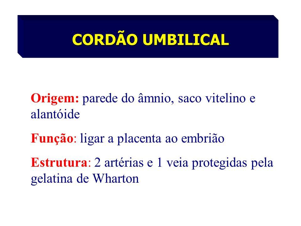Origem: parede do âmnio, saco vitelino e alantóide Função: ligar a placenta ao embrião Estrutura: 2 artérias e 1 veia protegidas pela gelatina de Whar