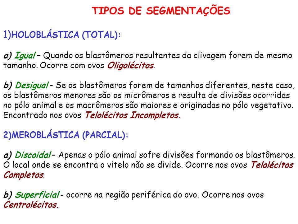 TIPOS DE SEGMENTAÇÕES 1) HOLOBLÁSTICA (TOTAL): a) Igual – Quando os blastômeros resultantes da clivagem forem de mesmo tamanho. Ocorre com ovos Oligol