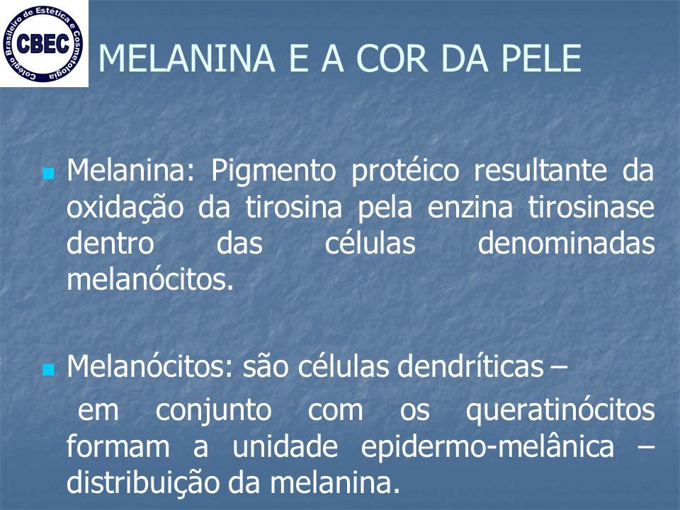 MELANINA E A COR DA PELE Melanina: Pigmento protéico resultante da oxidação da tirosina pela enzina tirosinase dentro das células denominadas melanócitos.