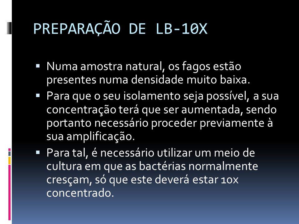 PREPARAÇÃO DE LB-10X Numa amostra natural, os fagos estão presentes numa densidade muito baixa. Para que o seu isolamento seja possível, a sua concent