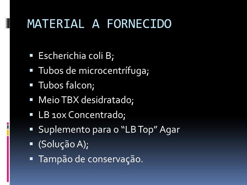 MATERIAL A FORNECIDO Escherichia coli B; Tubos de microcentrífuga; Tubos falcon; Meio TBX desidratado; LB 10x Concentrado; Suplemento para o LB Top Ag