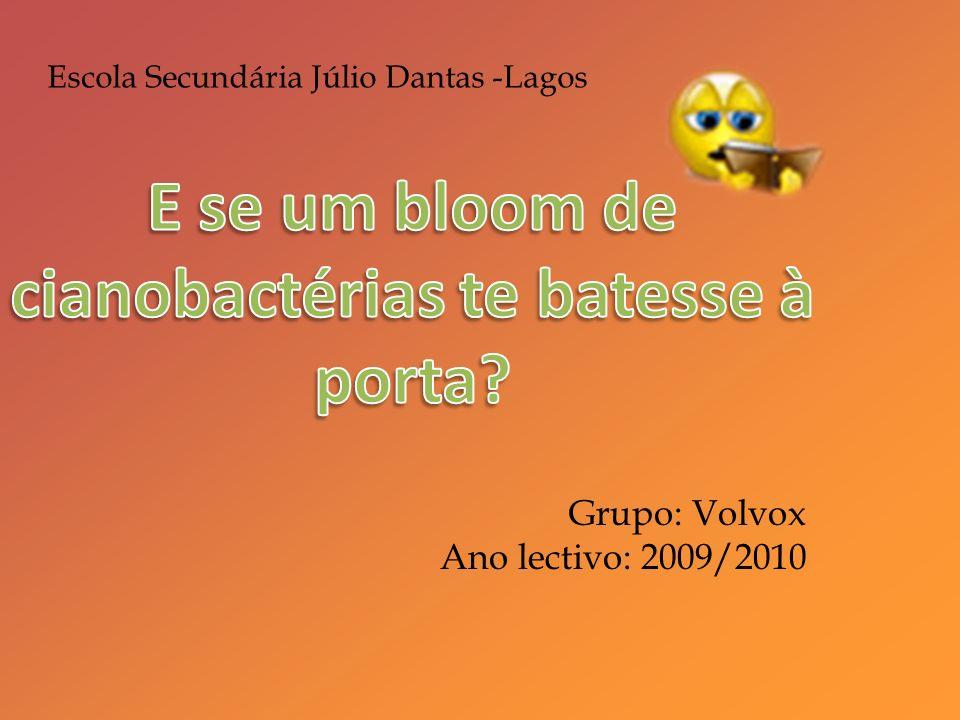 Bibliografia http://translate.google.pt/translate?hl=pt- PT&sl=es&u=http://biblioteca.portalpez.com/la-artemia-salina- vp15740.html&ei=VaiFS9zwGMit4Qbmr- 3fAQ&sa=X&oi=translate&ct=result&resnum=5&ved=0CBkQ7gEw BA&prev=/search%3Fq%3Dartemia%2Bsalina- %2Bciclo%2Bde%2Bvida%26hl%3Dpt-PT última visita a 13 de Fevereiro de 2010, última actualização a 13 de Fevereiro de 2010, disponibilizado por Portalpez; http://www.peixesornamentais.info/index.php?Itemid=41&id=83 &option=com_content&task=view ultima vez visitada a 27 de Fevereiro de 2010, última vez modificada a 27 de Fevereiro de 2010, disponibilizado por Peixesornamentais.