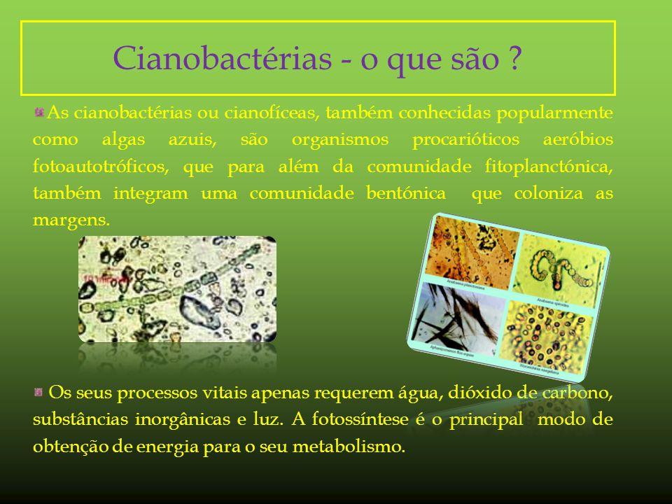 Cianobactérias - o que são .
