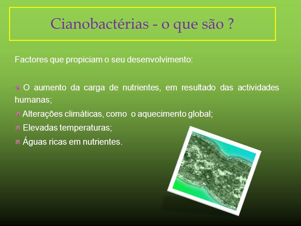 Acção da Microcystis aeruginosa sobre a Chlorella vulgaris Cél/mL1:11:21:4controlo 1º1,24E81,92E82,24E82,68E8 2º9,6E72,12E8 2,88E8 3º9,2E71,96E8 2,64E8 Tabela 2:Teste toxicidade de Chlorella vulgaris Observações: Dado que a concentração de Chlorella é superior nos poços com uma menor concentração de microcistinas, sendo a relação entre elas inversamente proporcional, pode-se inferir que estas toxinas provenientes da espécie Microcystis aeruginosa, inibem a multiplicação de Chlorella vulgaris.