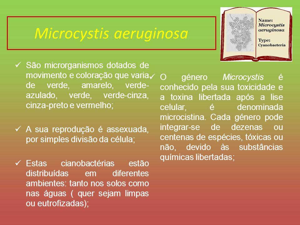 Importância das microalgas nos ecossistemas A Chlorella vulgaris encontra-se na posição de produtor primário em quase todas as cadeias alimentares e devido ao facto de ser fotossintética, oxigena a água em que se encontra.