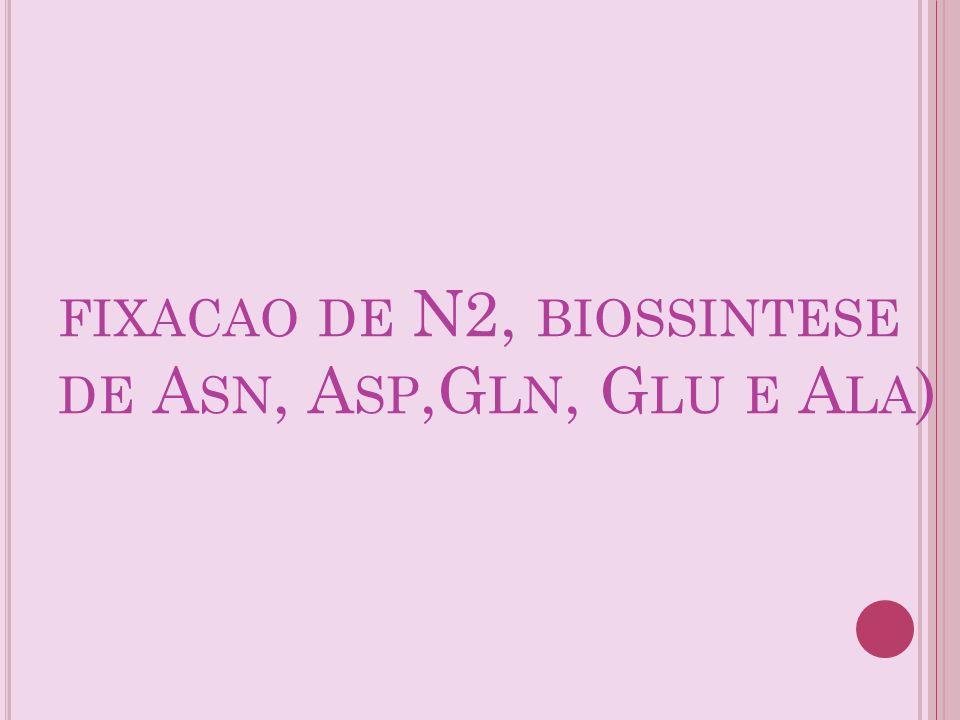 FIXACAO DE N2, BIOSSINTESE DE A SN, A SP,G LN, G LU E A LA )
