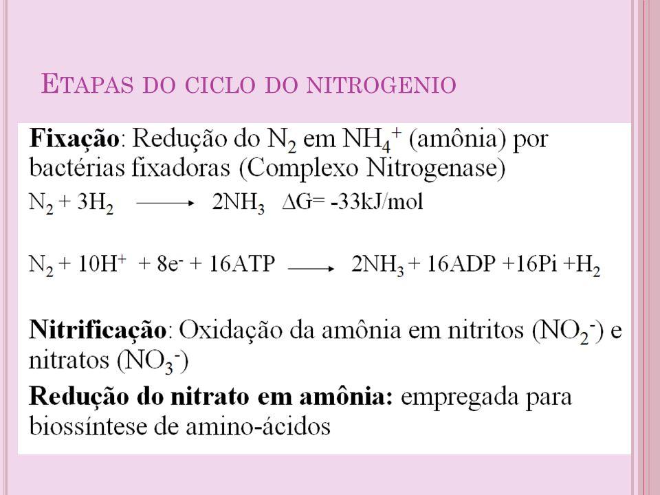 E TAPAS DO CICLO DO NITROGENIO