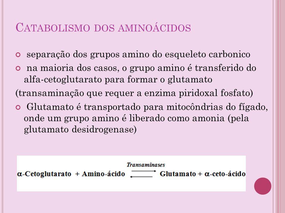 C ATABOLISMO DOS AMINOÁCIDOS separação dos grupos amino do esqueleto carbonico na maioria dos casos, o grupo amino é transferido do alfa-cetoglutarato