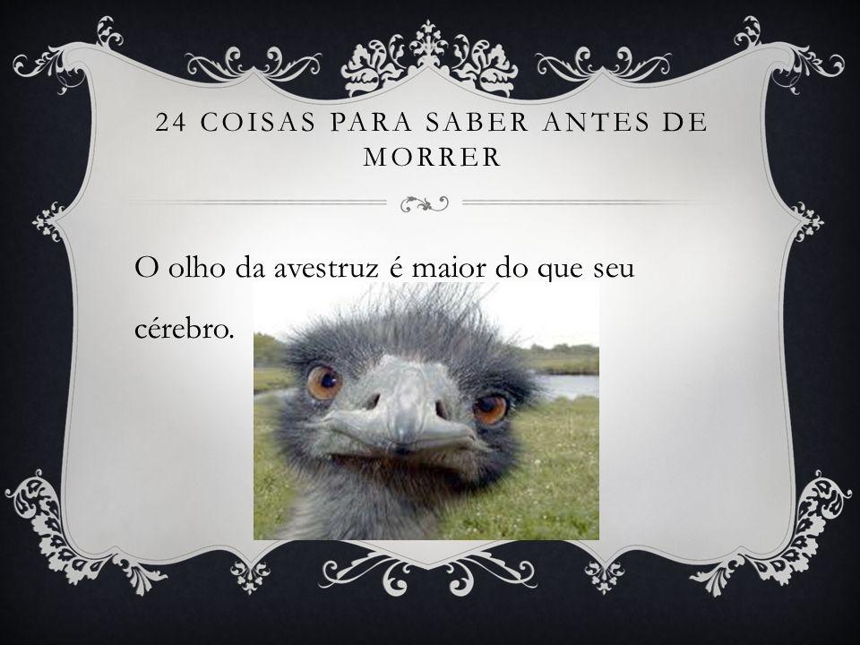 24 COISAS PARA SABER ANTES DE MORRER O olho da avestruz é maior do que seu cérebro.