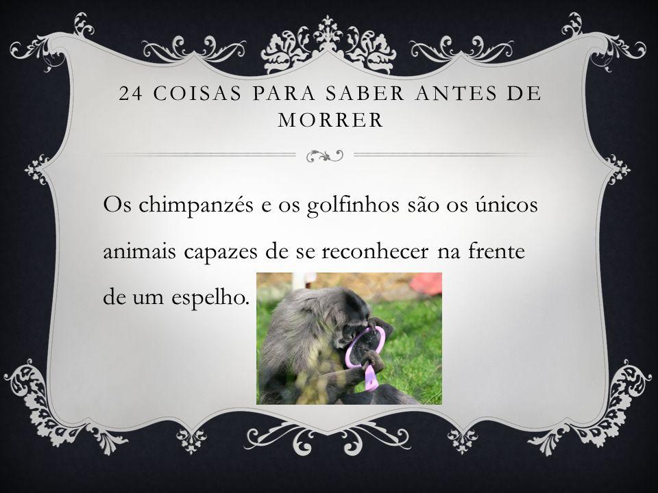 24 COISAS PARA SABER ANTES DE MORRER Os chimpanzés e os golfinhos são os únicos animais capazes de se reconhecer na frente de um espelho.