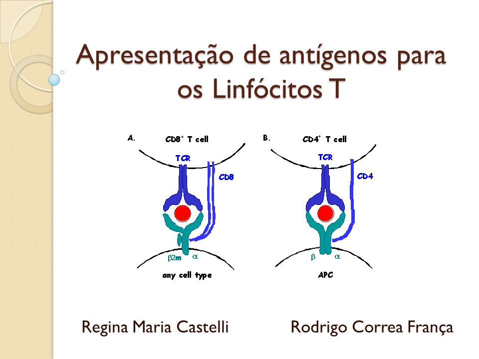 Apresentação de antígenos para os Linfócitos T Regina Maria Castelli Rodrigo Correa França