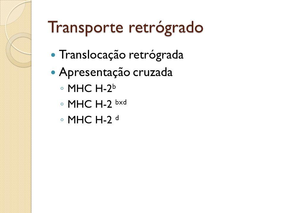 Transporte retrógrado Translocação retrógrada Apresentação cruzada MHC H-2 b MHC H-2 bxd MHC H-2 d