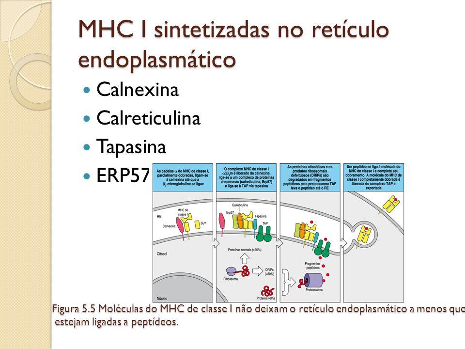 Calnexina Calreticulina Tapasina ERP57 MHC I sintetizadas no retículo endoplasmático Figura 5.5 Moléculas do MHC de classe I não deixam o retículo end