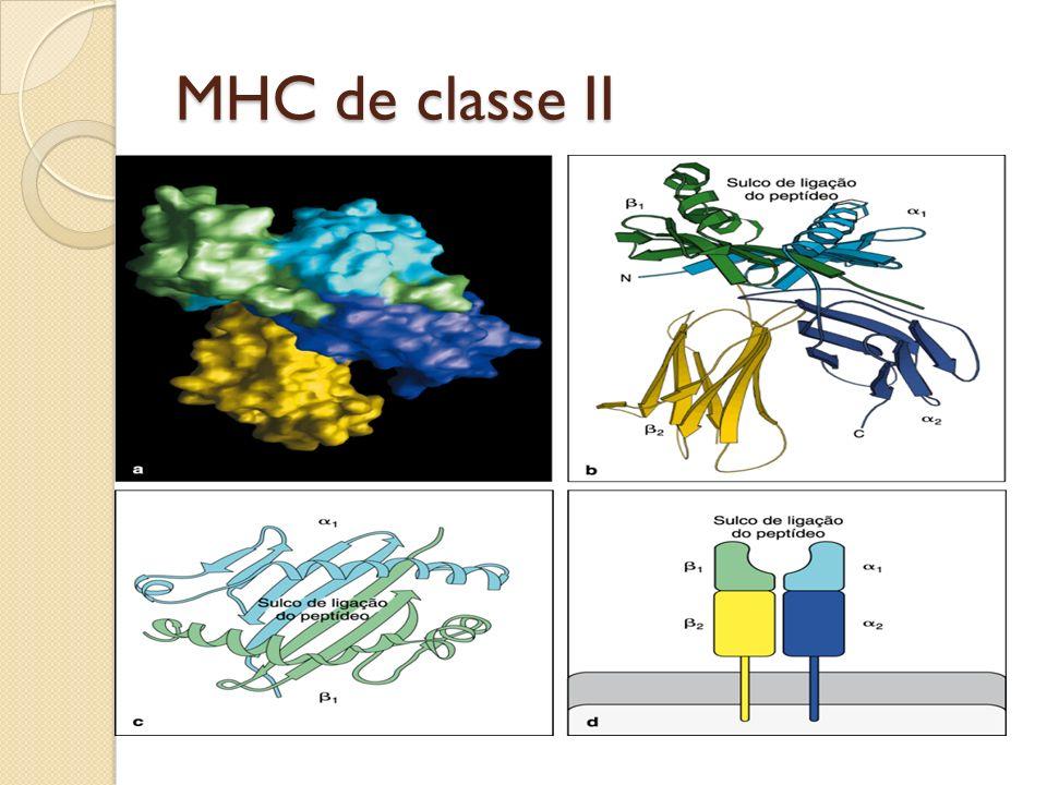 MHC de classe II