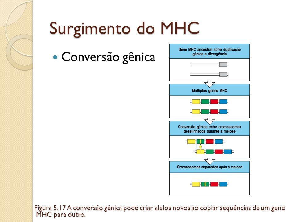 Surgimento do MHC Conversão gênica Figura 5.17 A conversão gênica pode criar alelos novos ao copiar sequências de um gene MHC para outro. MHC para out