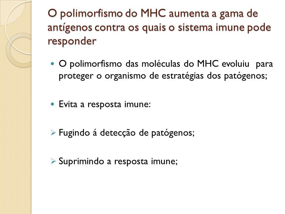 O polimorfismo do MHC aumenta a gama de antígenos contra os quais o sistema imune pode responder O polimorfismo das moléculas do MHC evoluiu para prot