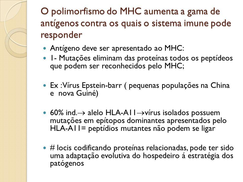 O polimorfismo do MHC aumenta a gama de antígenos contra os quais o sistema imune pode responder Antígeno deve ser apresentado ao MHC: 1- Mutações eli