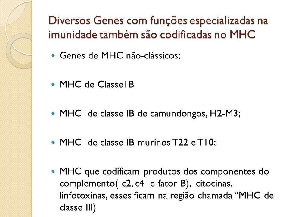 Diversos Genes com funções especializadas na imunidade também são codificadas no MHC Genes de MHC não-clássicos; MHC de Classe1B MHC de classe IB de c