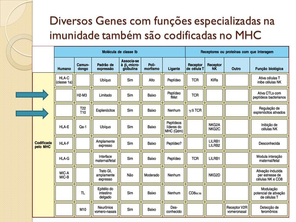Diversos Genes com funções especializadas na imunidade também são codificadas no MHC