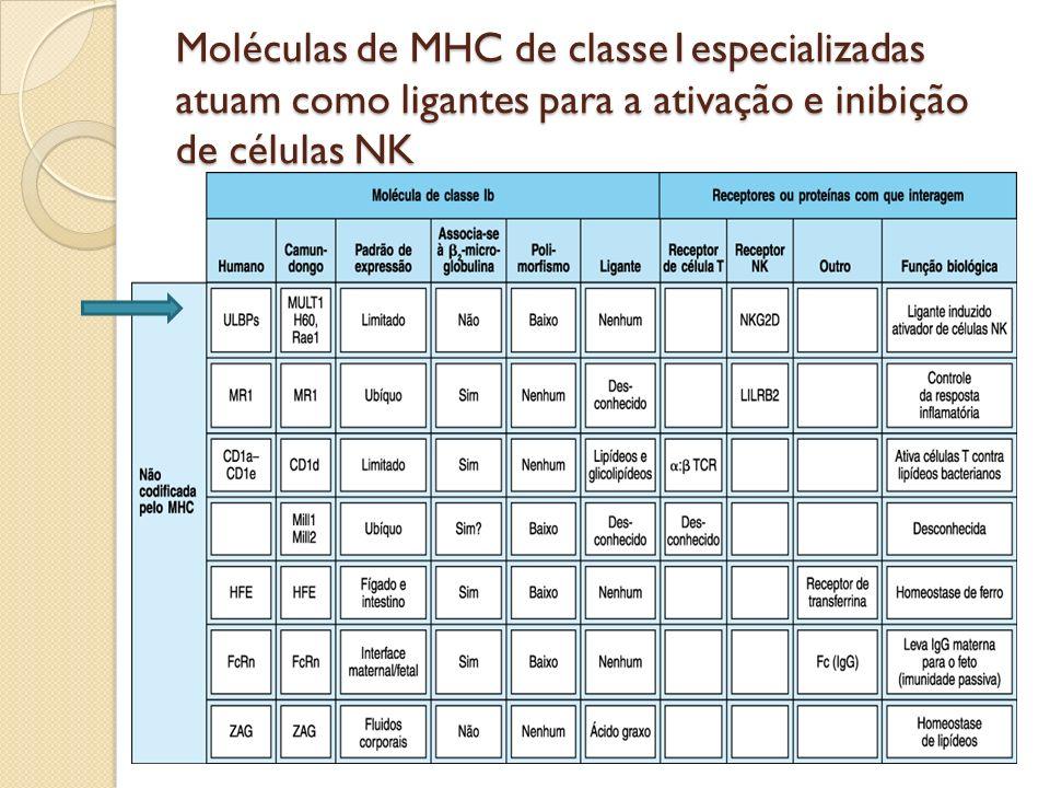 A família CD1 das moléculas tipo MHC de classe 1 é codificada fora do MHC e apresenta lipídeos microbianos para células T restritas CD1 é expressa em cél dendríticas e monócitos e timócitos; # do MHC1: Se direciona á vesículas endocíticas; CD1 apresentam glicolípidios e se ligam a eles ; CD1 classifica-se em: Grupo1: CD1a, CD1b, e CD1c ( apresentan antígenos glicolípidicos, fosfolipídicos, e lipopeptidicos microbianos( micobactérias); Grupo2:CD1d( se ligam a a antigeno lípidicos próprios) Grupo intermediário: CD1e