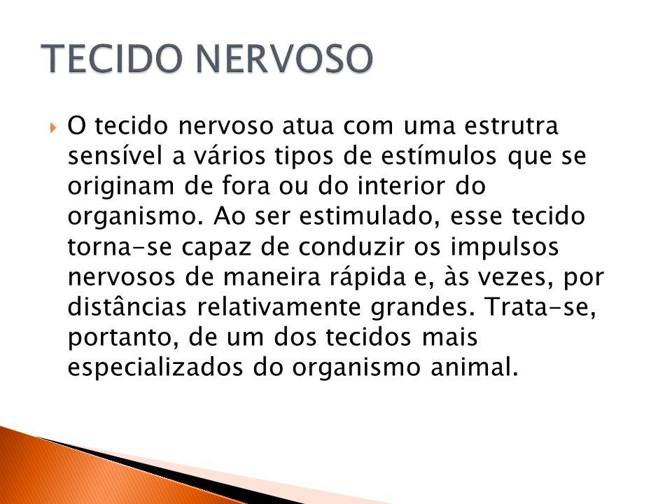 O tecido nervoso atua com uma estrutra sensível a vários tipos de estímulos que se originam de fora ou do interior do organismo.