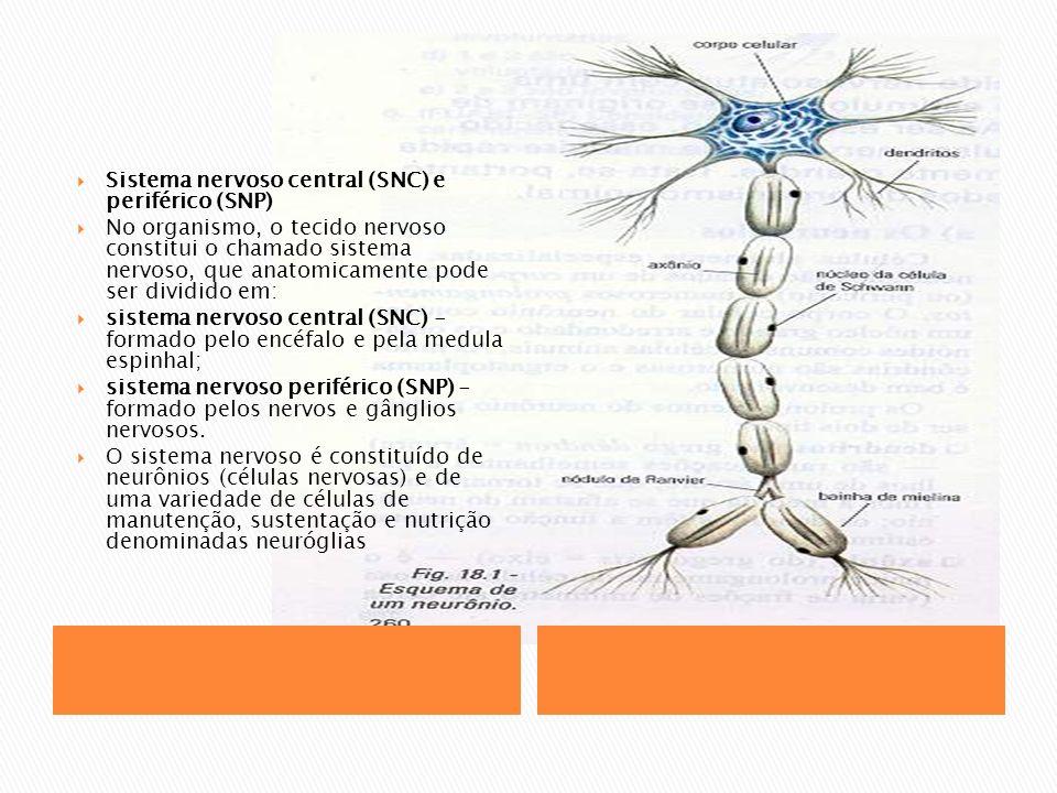 Sistema nervoso central (SNC) e periférico (SNP) No organismo, o tecido nervoso constitui o chamado sistema nervoso, que anatomicamente pode ser dividido em: sistema nervoso central (SNC) - formado pelo encéfalo e pela medula espinhal; sistema nervoso periférico (SNP) - formado pelos nervos e gânglios nervosos.